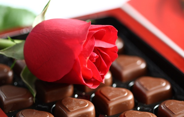 Picture flower, macro, love, mood, romance, rose, feelings, the sweetness, chocolate, candy, hearts, rose, red, dessert, …