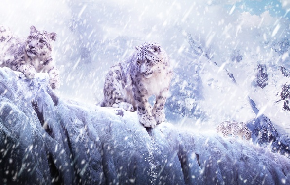 Picture ice, animals, snow, cats, mountains, leopard, IRBIS, bars, snowfall, cats