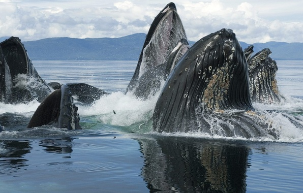 Picture animals, whales, sea