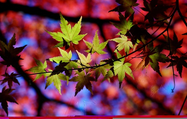 Picture leaves, light, branches, Tree