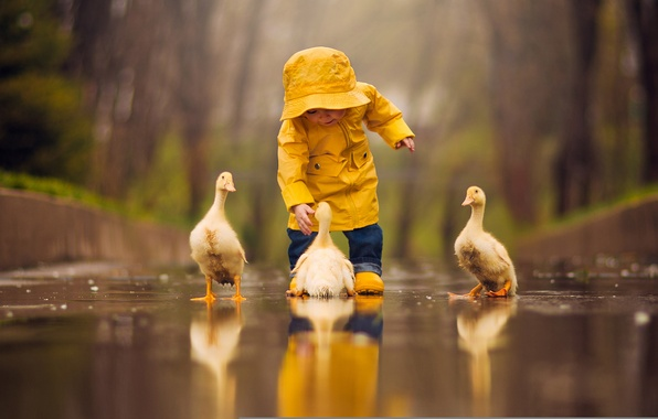 Photo wallpaper puddle, child, reflection, baby, Chicks, birds, water, the goslings