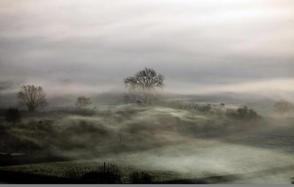 Picture field, landscape, night, fog