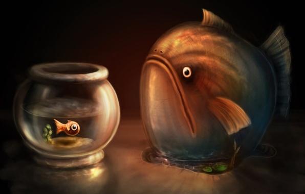 Picture figure, aquarium, Fish