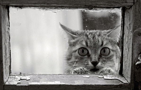 Picture cat, look, frame, black and white, window