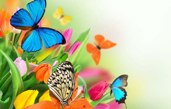 Picture butterfly, flowers, spring, colorful, tulips, fresh, flowers, beautiful, tulips, spring, butterflies