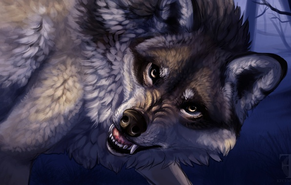 Picture animals, look, wolf, predator, art, mouth, fangs