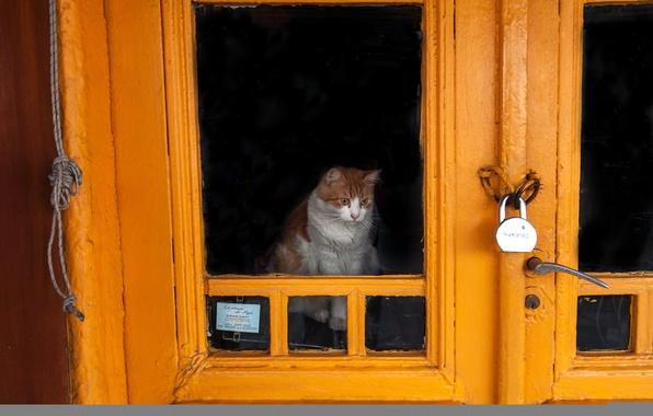 Picture cat, castle, the door