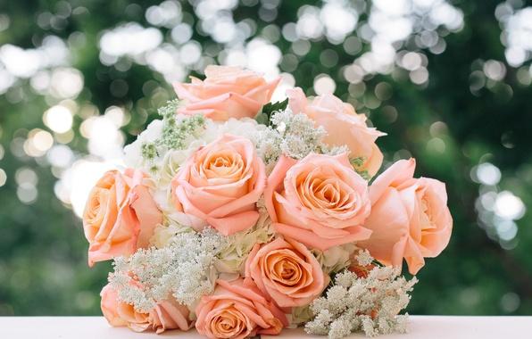 Picture roses, bouquet, buds, wedding bouquet