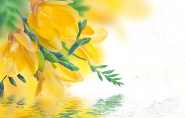Picture water, reflection, petals, buds, flowering, yellow, Freesia