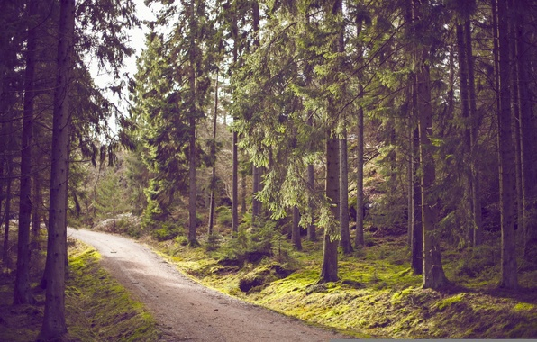 Picture road, forest, trees, moss, trail, pine