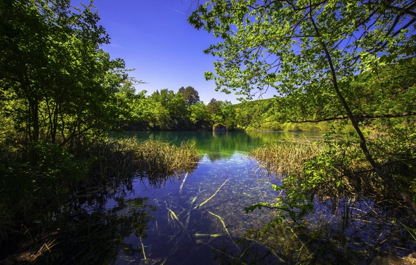 Picture greens, grass, trees, lake, the bushes, Croatia, Plitvice Lakes National Park