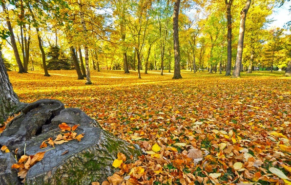 Picture autumn, forest, grass, leaves, trees, Park