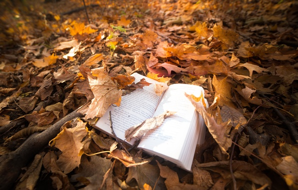Picture leaves, nature, book