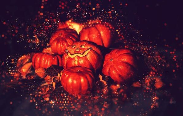 Picture darkness, pumpkin, Halloween