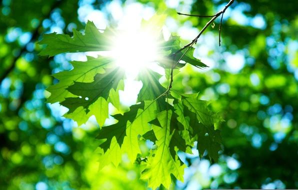 Picture the sun, macro, green, background, Wallpaper, day, leaf, wallpaper, leaves, widescreen, background, macro, sun, full …