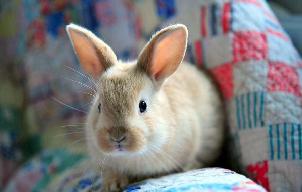 Picture hare, fluffy, rabbit