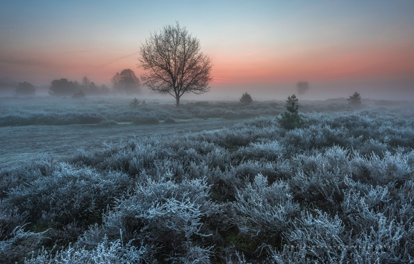Picture frost, trees, nature, spring, morning, Netherlands, the bushes, frost, March