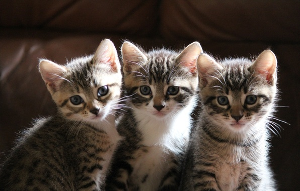 Picture kittens, three, sitting, look