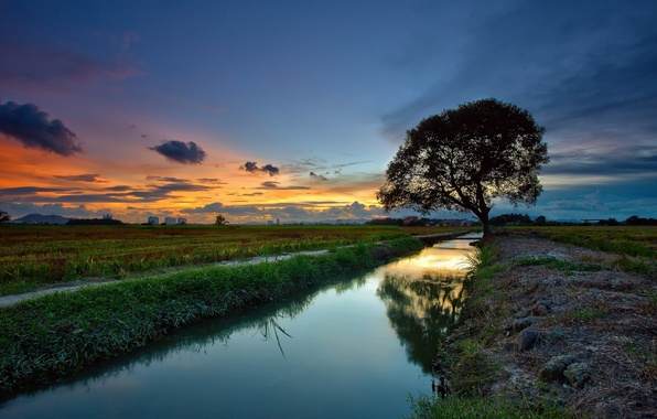 Picture landscape, sunset, river, tree