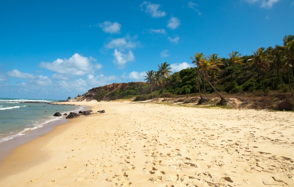 Picture sea, beach, palm trees, Brazil