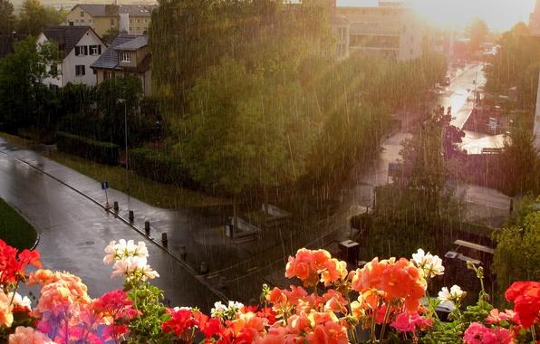 Picture flowers, rain, street, window