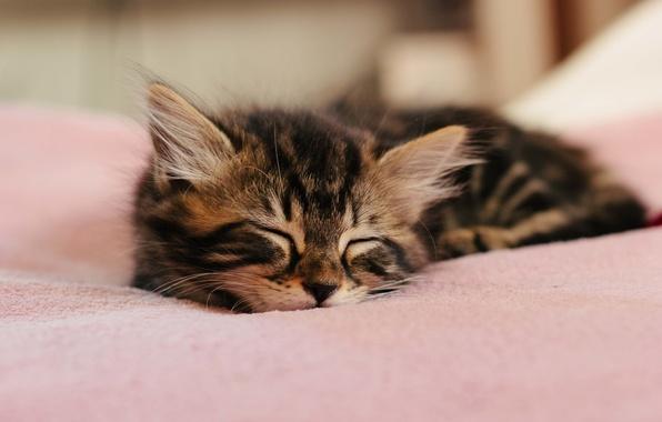 Picture kitty, wool, sleeping, ears