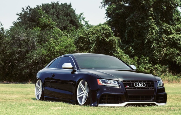 Picture Audi, Auto, Grass, Trees, Tuning, Machine, Glade, Drives, Landing