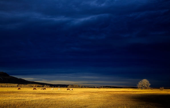 Picture field, light, tree, storm, horse, hill, gray clouds