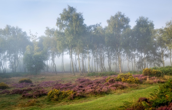 Picture forest, grass, trees, fog, glade, morning, UK, the bushes, Derbyshire, Derbyshire, Peak District, Stanton Moor, …