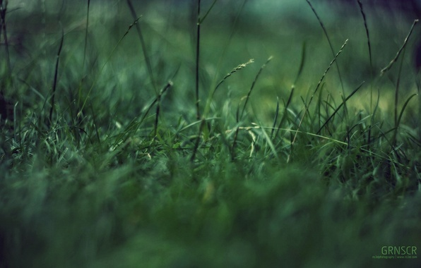 Photo wallpaper green garbage, macro, grass, concentration