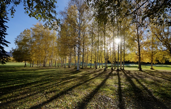 Picture autumn, forest, the sun, rays, trees, glade, shadow