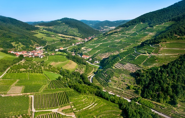 Picture mountains, field, home, Austria, panorama, forest, plantation, Wachau