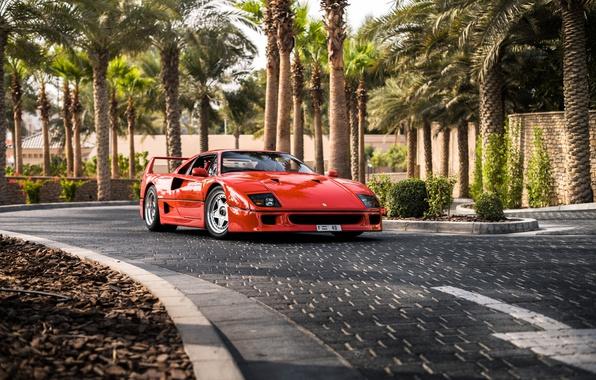 Picture road, palm trees, supercar, Ferrari F40, sports car