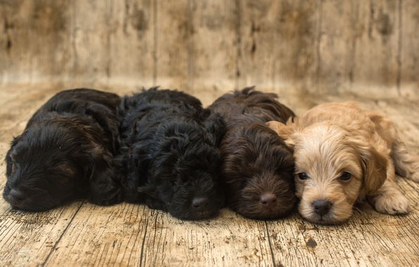 Picture puppies, kids, Spaniel, Quartet, cute