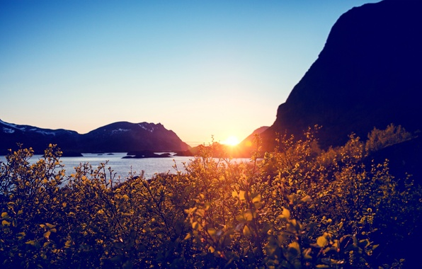 Picture the sun, sunset, flowers, mountains, lake, bright, the bushes