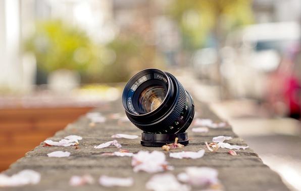Picture street, lens, petals, Fujinon