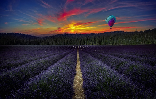 Picture field, forest, trees, landscape, sunset, flowers, balloon, lavender
