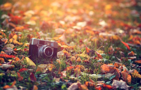 Picture autumn, grass, leaves, the sun, macro, light, heat, treatment, the camera