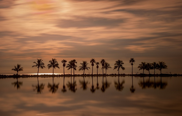 Picture sunset, reflection, palm trees, the ocean, Miami, FL, Miami, Florida, The Atlantic ocean, Atlantic Ocean