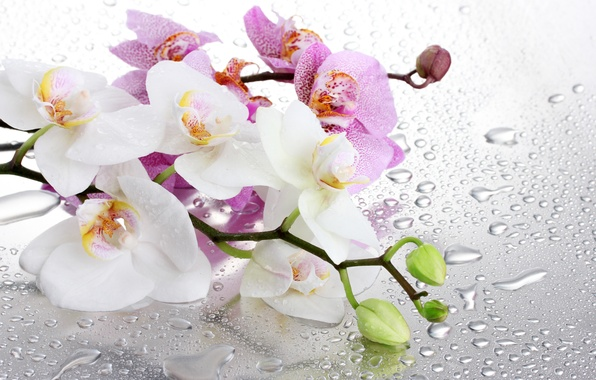 Picture glass, water, flowers, branches, droplets, Orchid