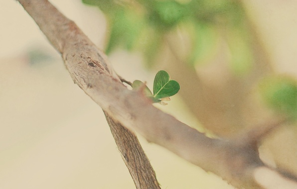 Picture macro, trees, branches, tree, mood, branch, foliage, heart, branch, heart, leaf, hearts, leaves, leaf, heart, …