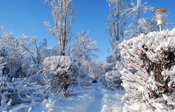 Picture winter, snow, nature, photo, trail, lantern, the bushes