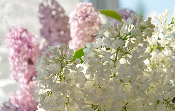 Picture macro, tenderness, lilac