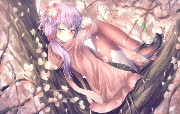 Picture girl, flowers, smile, tree, anime, Sakura, art, vocaloid, yuzuki up, t.m, voiceroid, aqua6233