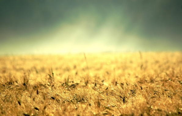 Photo wallpaper desktop, earth, yellow grass, gold, colossus