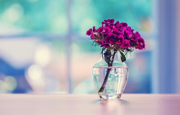 Picture glass, surface, flowers, vase, carnation, Turkish