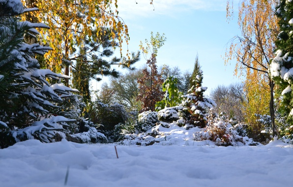 Picture winter, snow, landscape, nature, beauty, Autumn