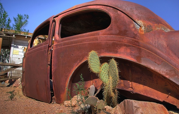 Picture auto, cactus, rust, case