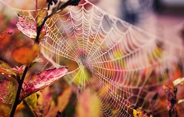 Picture autumn, leaves, drops, macro, nature, web, branch