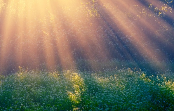 Picture rays, glade, morning, Morning Sun
